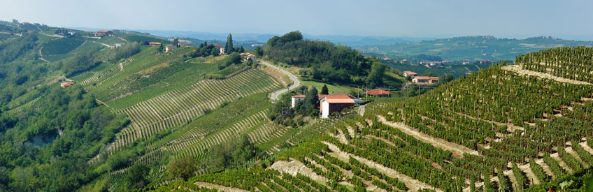 Wine Trip to Italy
